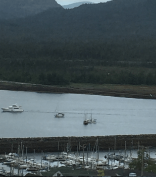 Harbor watching on a gray morning. View from my deck.