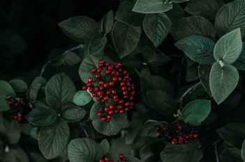 green leafed plant against black background