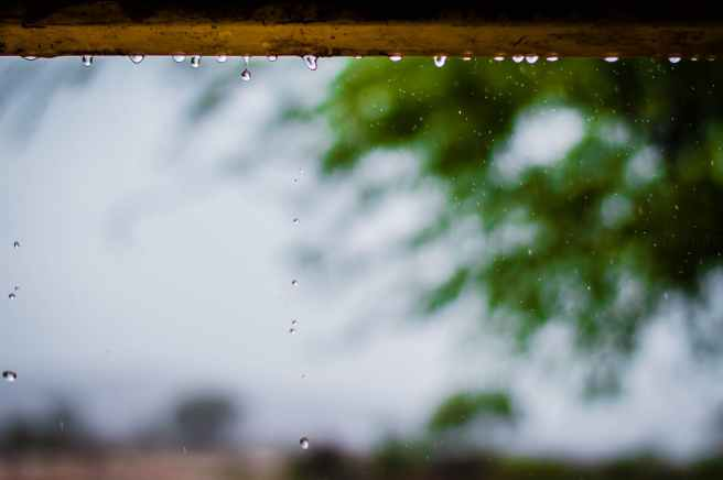 photography of rainy weather with trees